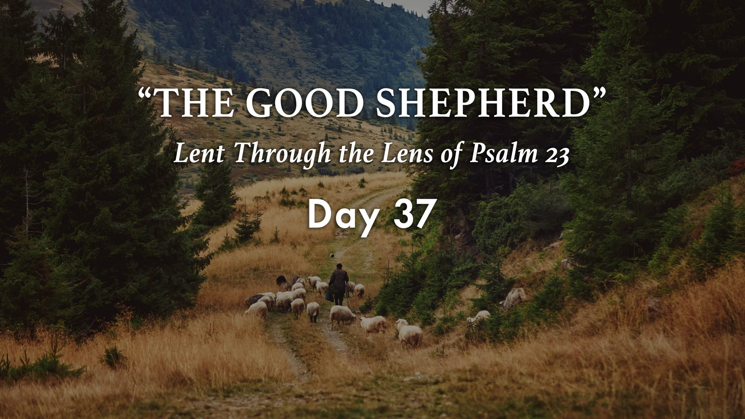 The Lord Is My Shepherd Day 37 Warrenton Baptist Church